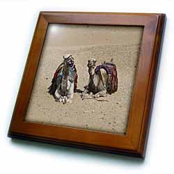 Two camels in the desert Framed Tile
