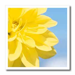Yellow Flower Petals on Blue Iron on Heat Transfer