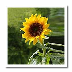 Sunflower Iron on Heat Transfer