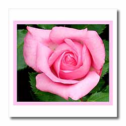 Pale Pink Rose Iron on Heat Transfer