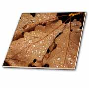 Three Brown Leaves Water Drops Tile