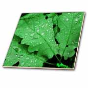 Three Bright Green Leaves Water Drops Tile