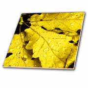 Three Yellow Green Leaves Water Drops Tile