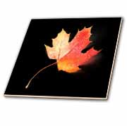 Falling Orange Maple Leaf  Tile