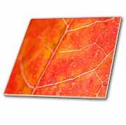 Orange Leaf  Tile