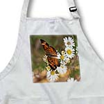 click on Monarch Butterfly on wild daisies to enlarge!