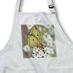 click on Yellow Butterfly on Wild Daisies to enlarge!