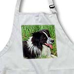 click on Border Collie to enlarge!