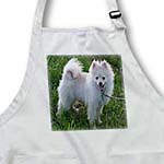 click on White Pomeranian  to enlarge!