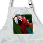 click on Scarlet Macaw to enlarge!