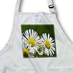 click on Wildflower Daisy Fleabane to enlarge!