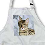 click on Savannah cat to enlarge!