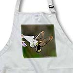 click on Snowberry Clearwing Hummingbird Moth 2 to enlarge!