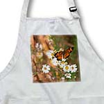 click on Pearl Cresent Butterfly on Wild Daisies to enlarge!