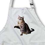 click on Gray Tabby to enlarge!