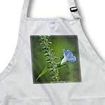 click on Heavely Blue Ivy Leaf Morning Glory Wildflower on North Mountain to enlarge!