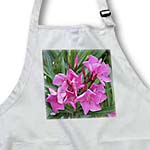 click on Oleander Pink - pink, flower, tree, oleander, blossom, tropical plant, buds to enlarge!