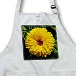 click on Mary Bud - flower, asteraceae, birth flower, calendula, flowers, marigold, yellow to enlarge!