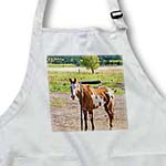 click on Pony With Brown and White With Spots on Its Belly Out In The Pasture to enlarge!