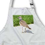 click on Watching - Spring Photography - Killdeer Bird to enlarge!