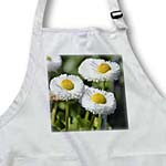 click on Spring Garden - White English Daisies - Flowers to enlarge!