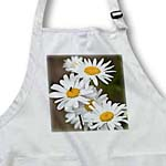 click on Daisy Flowers in Spring - Floral Photography to enlarge!