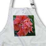 click on A Beautiful peach colored Hibiscus to enlarge!
