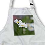 click on Two White Daisy Flowers - Spring Photography to enlarge!