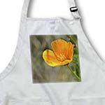 click on Pretty California Poppy Flower - Spring Photography to enlarge!
