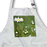 click on One Daisy - White Flowers - Spring Photography to enlarge!