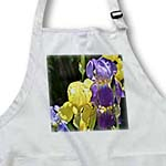 click on Yellow and Purple Iris Flowers - Spring Photography to enlarge!