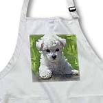 click on Bichon Frise Puppy to enlarge!