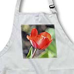 click on Red Tulip - Flowers - Floral Print - Spring Photography to enlarge!