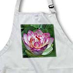 click on A Beautiful lotus flower to enlarge!