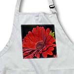click on Bright Red garden gerbera daisy to enlarge!