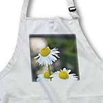 click on Proud Daisy - Spring - Floral Print - Photography to enlarge!