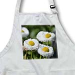 click on White English Daisy Floral - Flowers - Spring to enlarge!