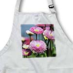 click on Pretty Pink English Daisy Flowers - Spring Floral Photography to enlarge!