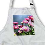 click on Pink English Daisy Garden of Flowers - Spring to enlarge!