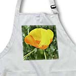 click on Orange Perfection - Poppy Flower - Floral Print - Spring Flowers to enlarge!