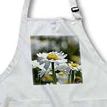 click on Patch of Daisies - White Flowers - Pretty Spring Floral to enlarge!