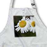 click on Daisy Day Flower - Floral Print - Gardens in Spring to enlarge!