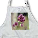 click on Beautiful Garden Pink Clover Type Flower with Bee to enlarge!
