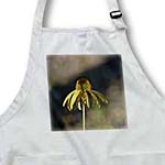 click on Inspired Garden Flower - Yellow Summer Echinacea Floral to enlarge!