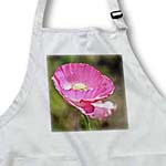 click on Pretty Spring Garden Pink Iceland Poppy Floral - Flowers to enlarge!