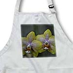 click on Two colorful phalaenopsis orchids to enlarge!