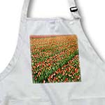 click on Tulip Fields to enlarge!