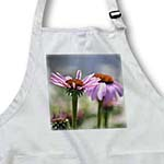 click on Garden of Echinacea Flowers - Floral Print to enlarge!