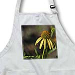 click on Summer Echinacea Flower - Yellow Floral Print to enlarge!