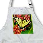 click on Tiger Swallow Tail to enlarge!